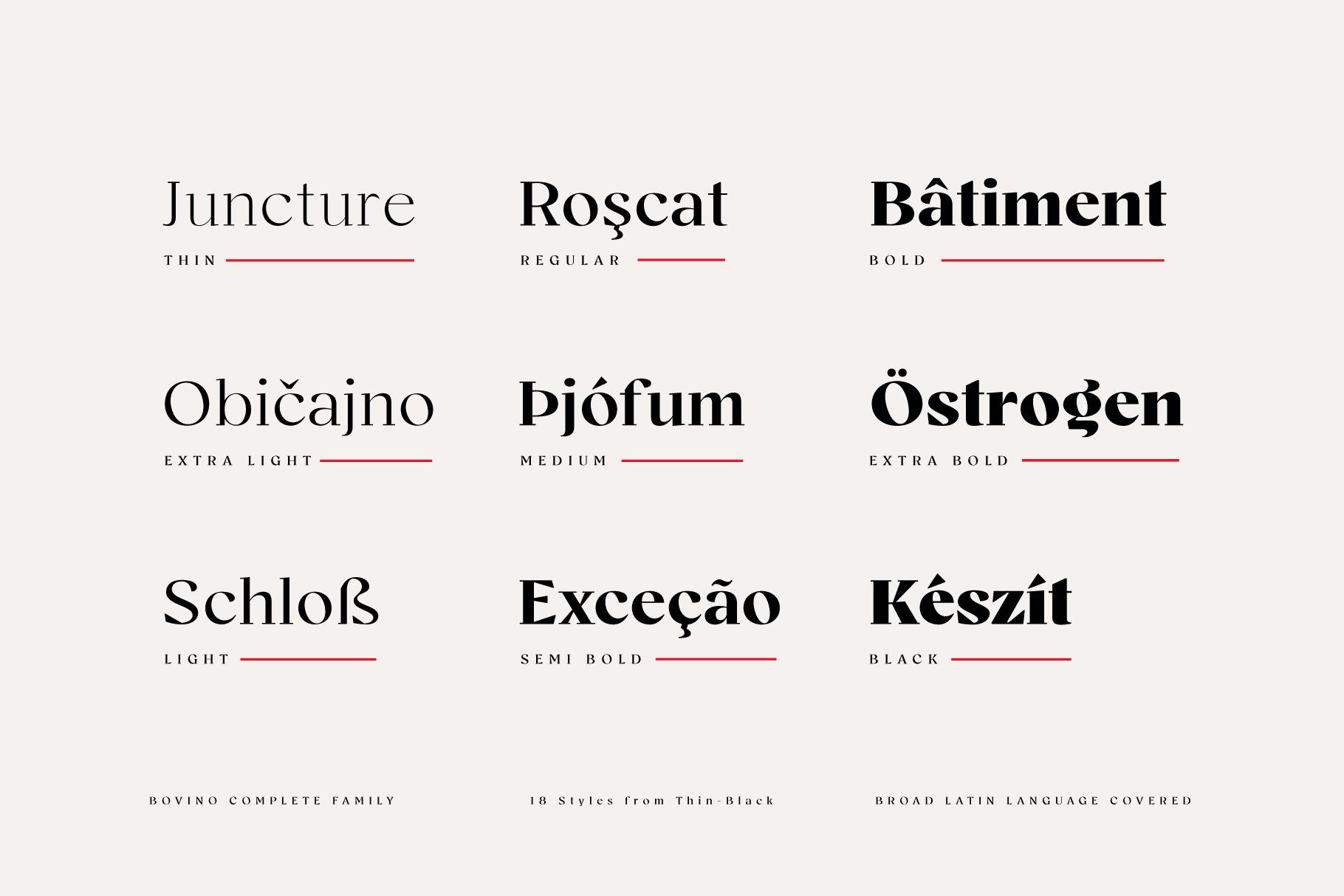 Bovino-(Creative-Market)-5
