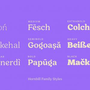 Hornbill-Poster-(Creative-Market)-6